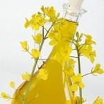 рапсовое масло польза и вред