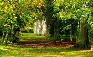 деревья польза и вред