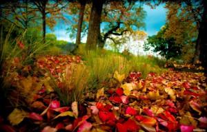 опавшая листва польза и вред