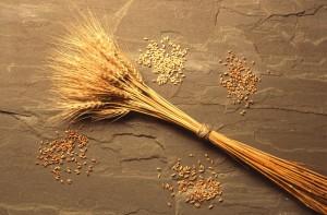 пшеница польза и вред