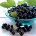 blackcurrant_07-150x150