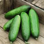 cucumbers_02-150x150