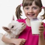 goat_milk_08-150x150