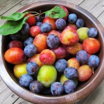picking_plums_10-150x150