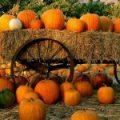 pumpkin-150x150