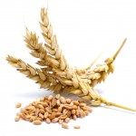 wheat_02-150x150