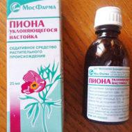 Настойка пиона: польза и вред, полезные свойства и противопоказания цветов для человека