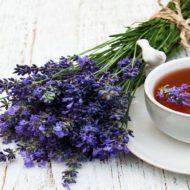 Лаванда: полезные свойства и противопоказания, применение в народной медицине